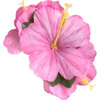 Flower Hair-Clip - Hawaiian